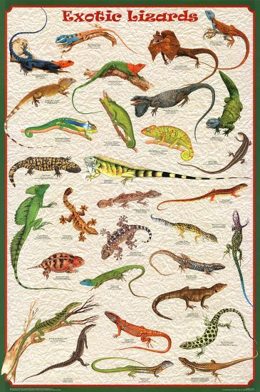 Laminated Exotic Lizards Reptiles Educational Science Chart Poster--Laminated Poster