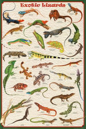 Laminated Exotic Lizards Reptiles Educational Science Chart Poster