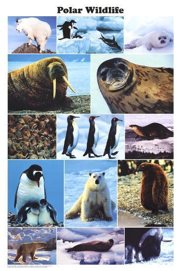 Laminated Polar Wildlife Educational Animal Chart Poster--Laminated Poster