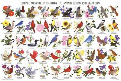 Laminated State Birds and Flowers Educational Chart Poster--Laminated Poster