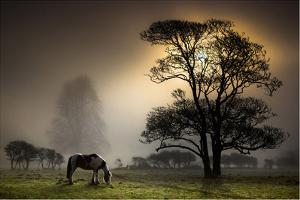 Horse Grazing in Field by Land and Light