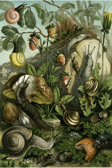 Land Molluscs or Snails and Slugs--Giclee Print