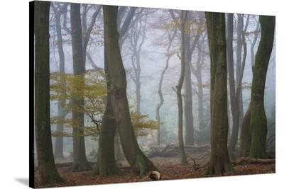 Land Of Dreams-Ellen Borggreve-Stretched Canvas Print