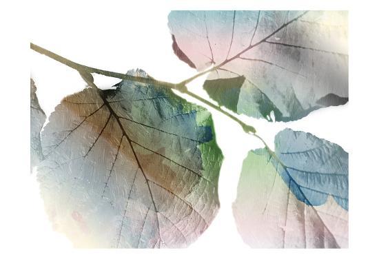 Land Ombre-Jace Grey-Art Print