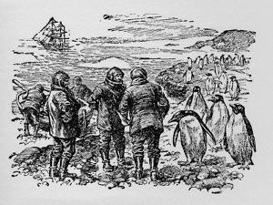 Landed on a Small Island Inhabited by Myriads of Penguins, C1918