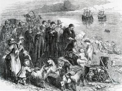 https://imgc.artprintimages.com/img/print/landing-of-pilgrim-fathers-with-furnishings-and-cattle-on-coast-of-new-england_u-l-pp3t8d0.jpg?p=0