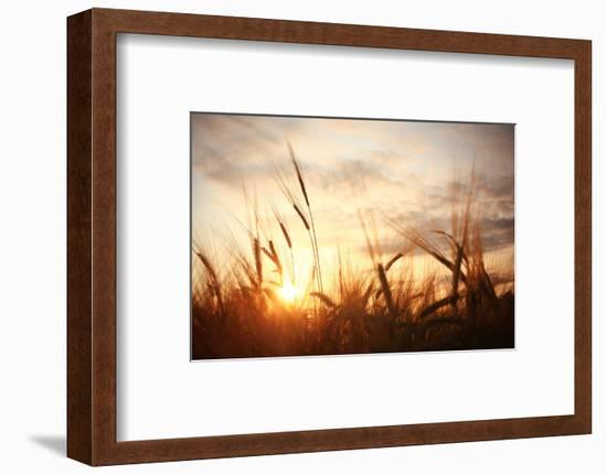 Landscape Fantastic Sunset on the Wheat Field Sunbeams Glare-Kichigin-Framed Photographic Print