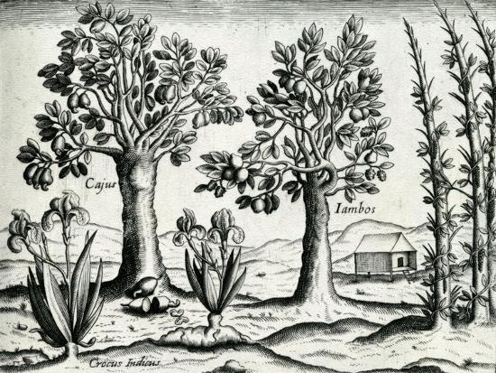 Landscape from 'India Orientalis', 1598-Theodore de Bry-Giclee Print