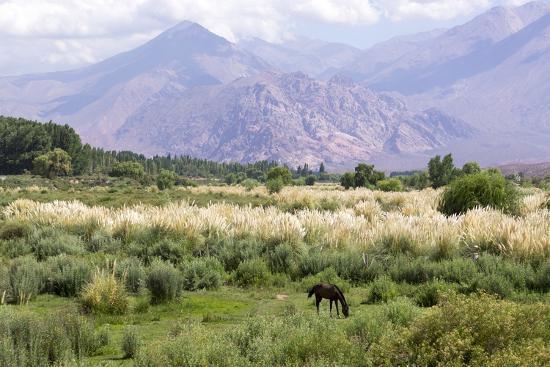 Landscape in the Andes, Argentina-Peter Groenendijk-Photographic Print