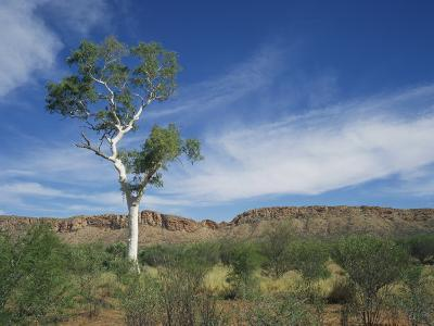 Landscape in the West Macdonnell Ranges Near Alice Springs in the Northern Territory, Australia-Wilson Ken-Photographic Print