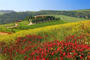 Landscape near San Quirico d'Orcia, Val d'Orca, Province of Siena, Tuscany, Italy