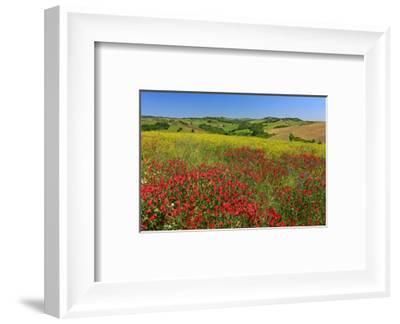 Landscape near Volterra in Spring, Province of Pisa, Tuscany, Italy--Framed Art Print