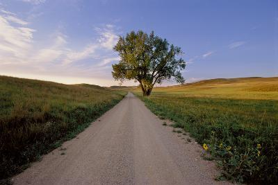 Landscape of a Country Road and Cottonwood Tree-Michael Forsberg-Photographic Print