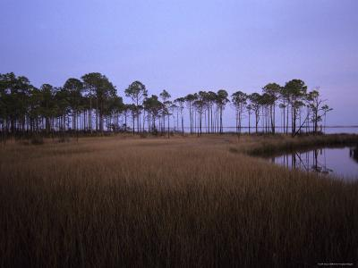 Landscape of a Swamp in Florida-Stacy Gold-Photographic Print