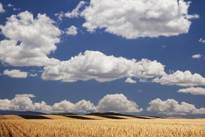 Landscape of Wheat Fields in Western Part of State, Colorado, USA-Jaynes Gallery-Photographic Print