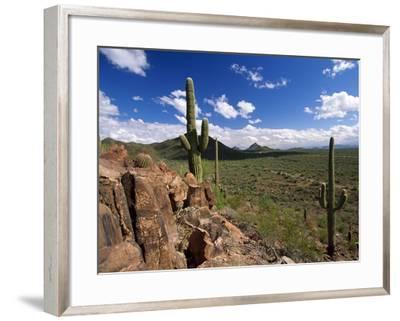 Landscape, Saguaro National Park, Arizona, USA-Massimo Borchi-Framed Photographic Print
