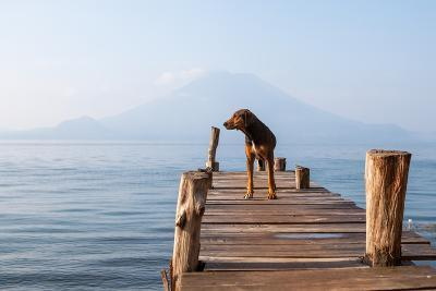 Landscape with a Dog on a Pier by the Lake.-Tati Nova photo Mexico-Photographic Print