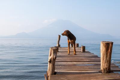 Landscape with a Dog on a Pier by the Lake.-Tati Nova photo Mexico-Photographic Print