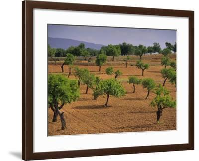 Landscape with Olive Trees, Majorca (Mallorca), Balearic Islands, Spain, Europe-John Miller-Framed Photographic Print