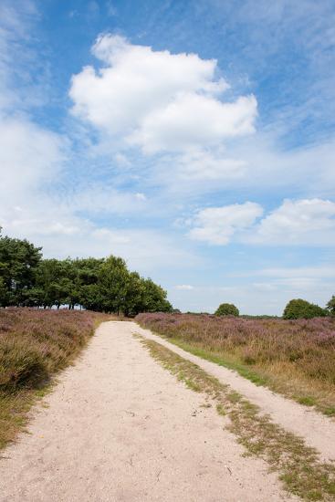 Landscape with Sand Path Purple Heath Fields in Summer-Ivonnewierink-Photographic Print