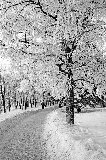 Lane in Town Park-basel101658-Photographic Print