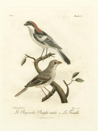 Antique French Birds II