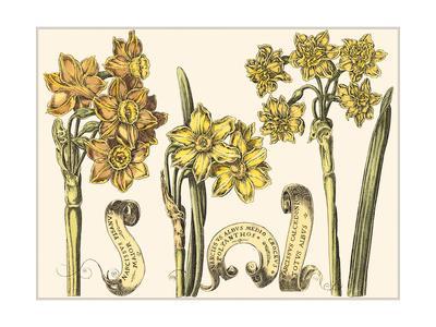 Custom Narcissus in Bloom I