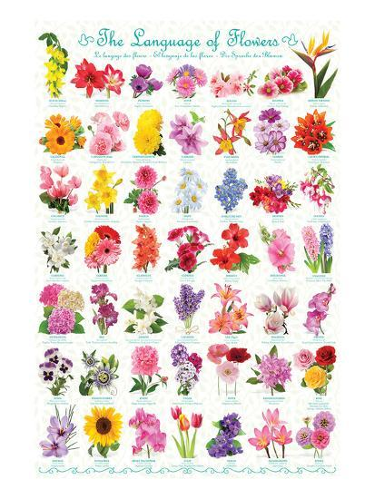 Language of Flowers--Art Print