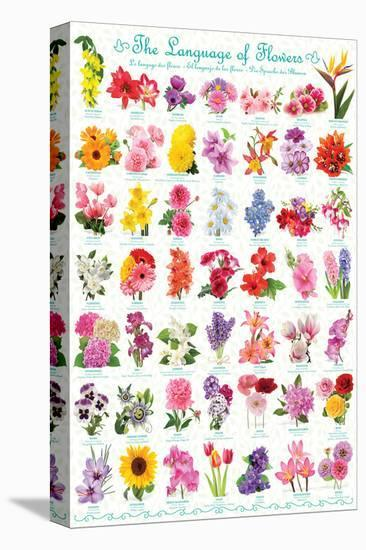 Language of Flowers--Stretched Canvas Print