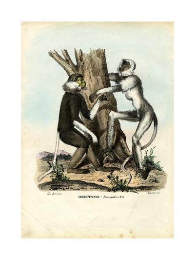 Langurs, 1863-79-Raimundo Petraroja-Giclee Print