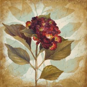 Aubergine Hydrangea Portrait by Lanie Loreth