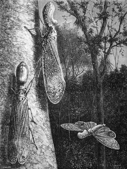 Lantern Fly Fulgora Laternaria on Tree Trunk-Chris Hellier-Giclee Print