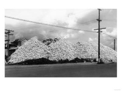 A Mountain of Oyster Shells View - South Bend, WA by Lantern Press
