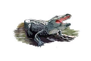 Alligator - Icon by Lantern Press