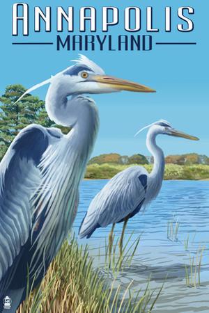 Annapolis, Maryland - Blue Herons by Lantern Press