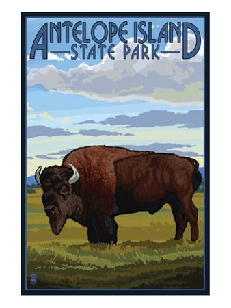 Antelope Island State Park, Utah - Bison and Field by Lantern Press