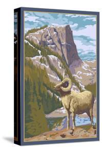 Big Horn Sheep by Lantern Press