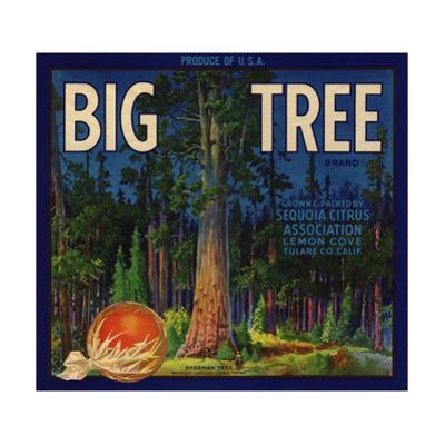 Big Tree Brand - Lemon Cove, California - Citrus Crate Label by Lantern Press