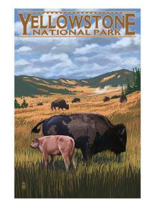 Bison and Calf Grazing - Yellowstone National Park by Lantern Press