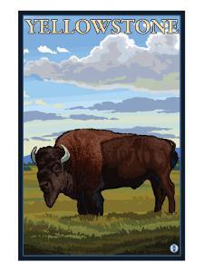 Bison Scene, Yellowstone National Park by Lantern Press