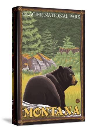 Black Bear in Forest, Glacier National Park, Montana