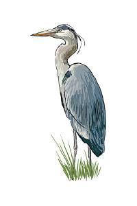 Blue Heron - Icon by Lantern Press