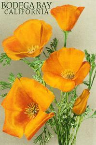 Bodega Bay, California - Poppy by Lantern Press
