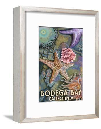 Bodega Bay, California - Tidepool