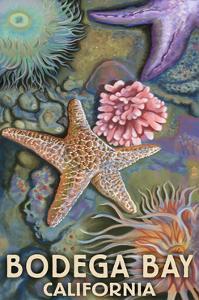 Bodega Bay, California - Tidepool by Lantern Press