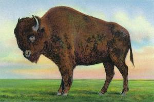 Buffalo, New York, Greetings From with a Buffalo by Lantern Press