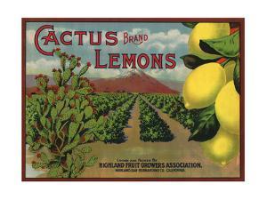 Cactus Brand - Highland, California - Citrus Crate Label by Lantern Press