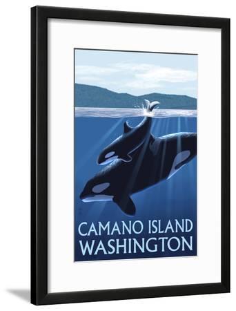 Camano Island, Washington - Orca and Calf