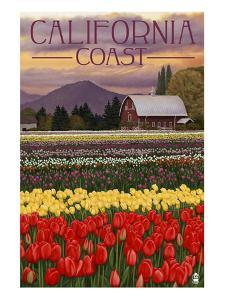 Cambria, California - Tulip Farm by Lantern Press
