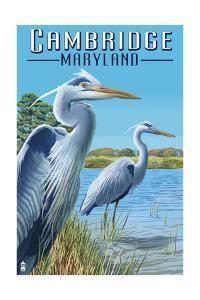 Cambridge, Maryland - Blue Herons by Lantern Press